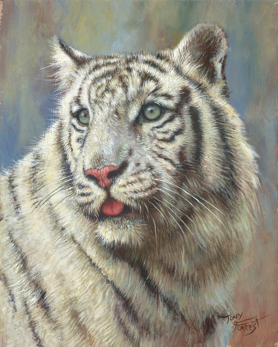 White Tiger by tony forrest -  sized 10x12 inches. Available from Whitewall Galleries